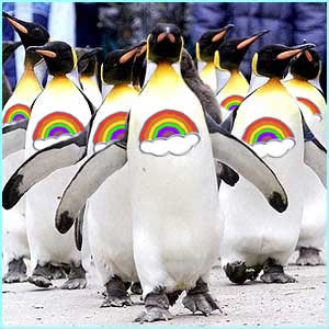 http://noliberty.com/rainbowpenguins.jpg